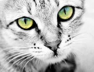 ojos-gato-L-1